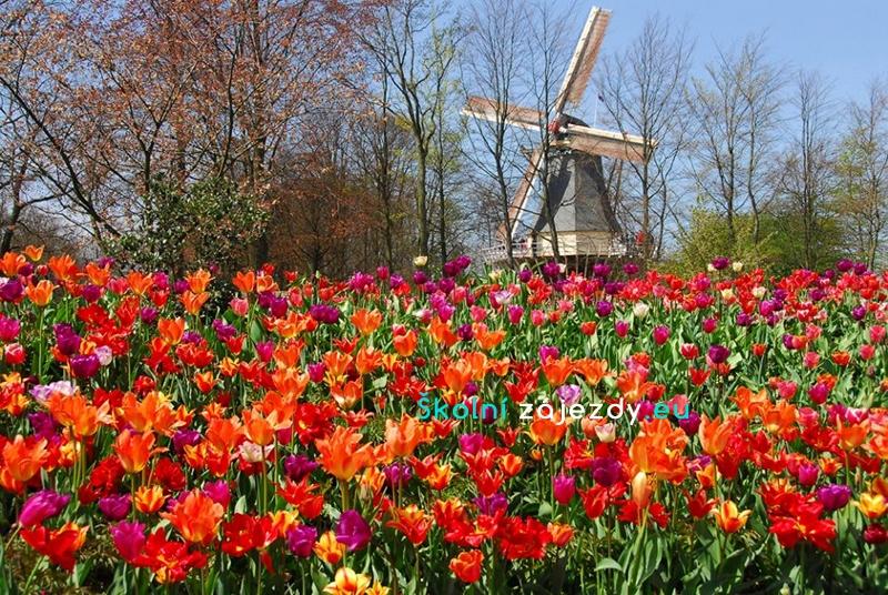 Školní zájezdy do Holandska